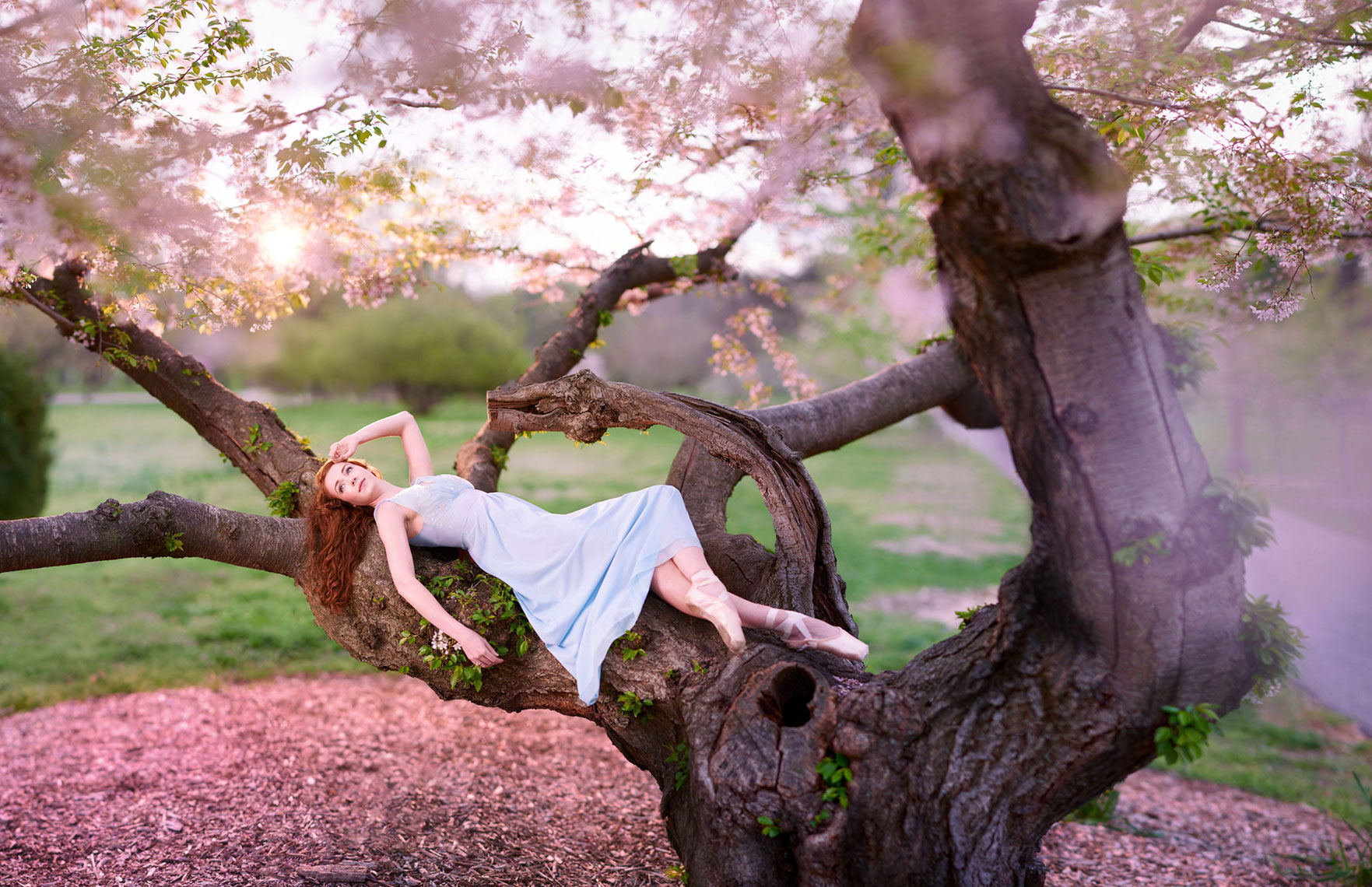 Ballet portrait in flowering tree.