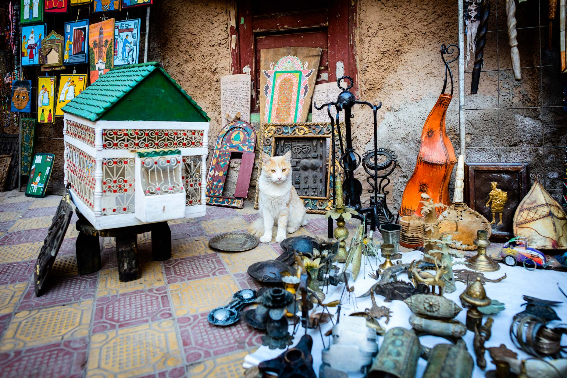Marrakech-Street-Cat